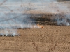 Burning the fields
